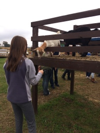 feed-goats