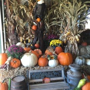 pumpkin-patch-picture